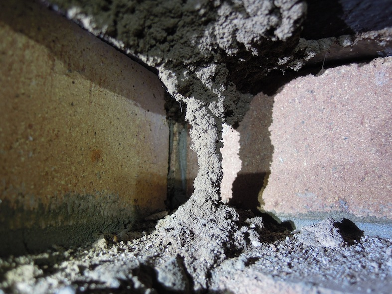 Termite Mud tunnel found under home in Ryde