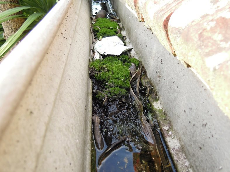 Blocked Gutters found during Building Inspection Pennant Hills